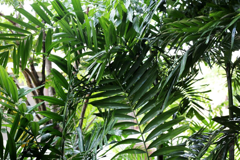photo Tropical leaves_zpsrg0j17i7.jpg